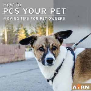 Pet PCS: Moving Tips For Pet Owners