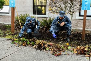 161104-N-SH284-026 SILVERDALE, Wash. (Nov. 4, 2016) Petty Officers 2nd Class Jorge Arvilla, from El Paso, Texas and Carlos Guerra, from San Diego, currently assigned to the Transient Personnel Unit at Naval Base Kitsap-Bangor, clean debris around their building during a base-wide fall clean-up. The clean-up focused on ground maintenance, trash pickup and the removal of yard waste debris in an effort to help make the base a safe and pleasant work environment. (U.S. Navy photo by Petty Officer 2nd Class Vaughan Dill/Released)