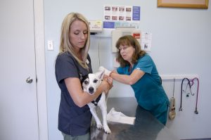 Christine Rossen (left), a certified veterinary technician, holds Barkley, a terrier mix, while he receives an exam by Dr. Laurel Rhodes, a veterinarian at the base veterinary treatment facility, for his health certificate, May 20, 2015. (U.S. Marine Corps photo by Kristen Wong/Released)
