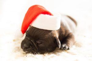 christmas-pet