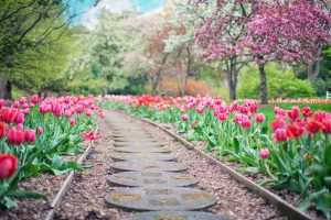 4 Simple Summer Landscaping Tips