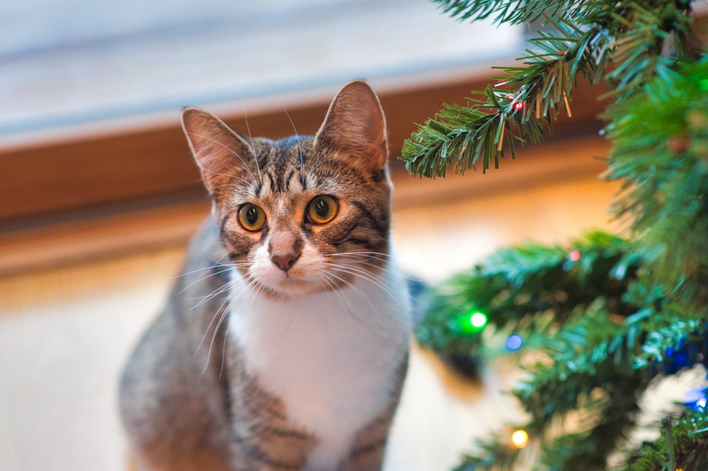 Pet cat near a Christmas tree around the holidays, Photo by Jessica Lewis from Pexels