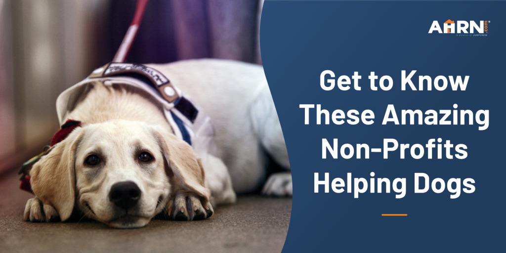 Get to Know These Amazing Non-Profits Helping Dogs