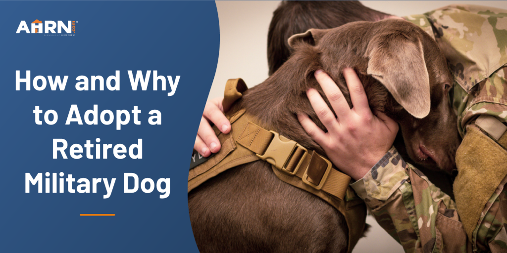 How and Why to Adopt a Retired Military Dog