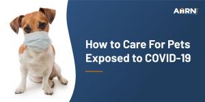 Pet Care Covid-19
