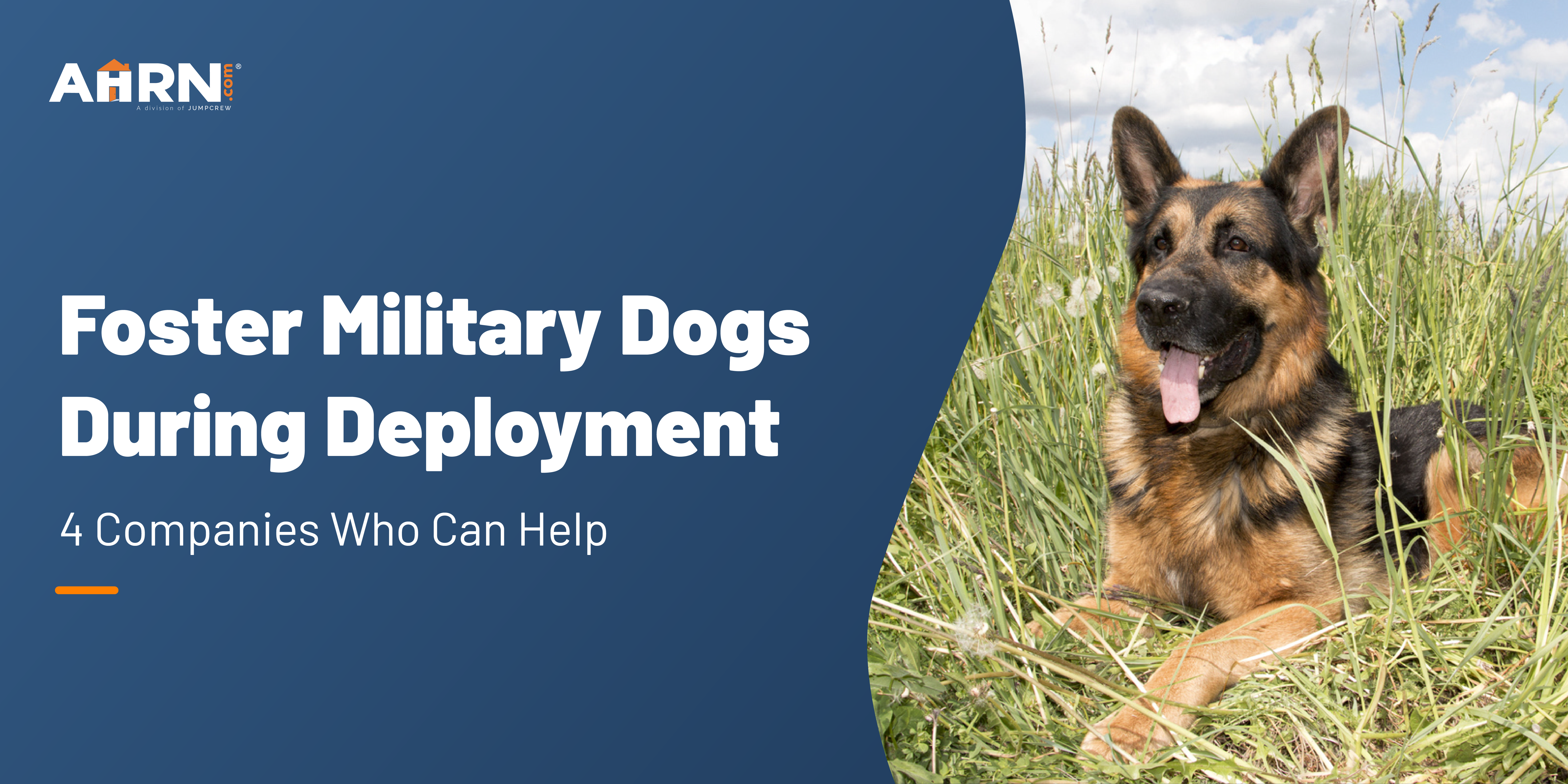Foster Military Dogs During Deployment