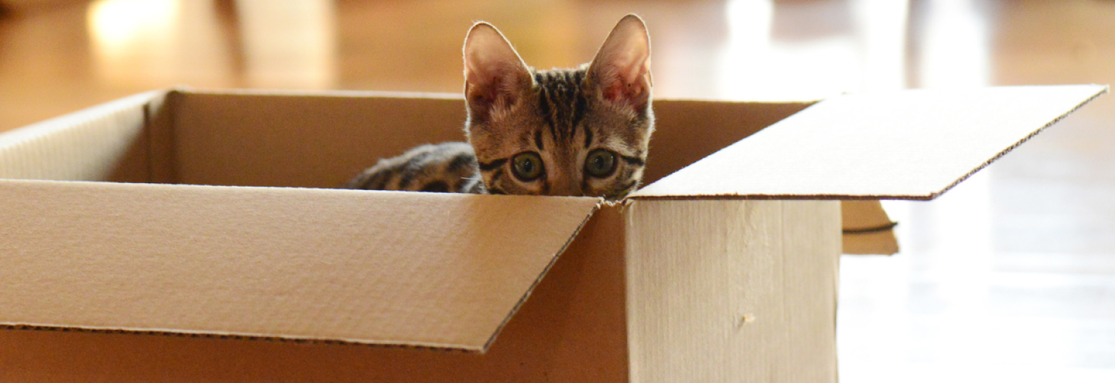 Tips For Moving With Cats