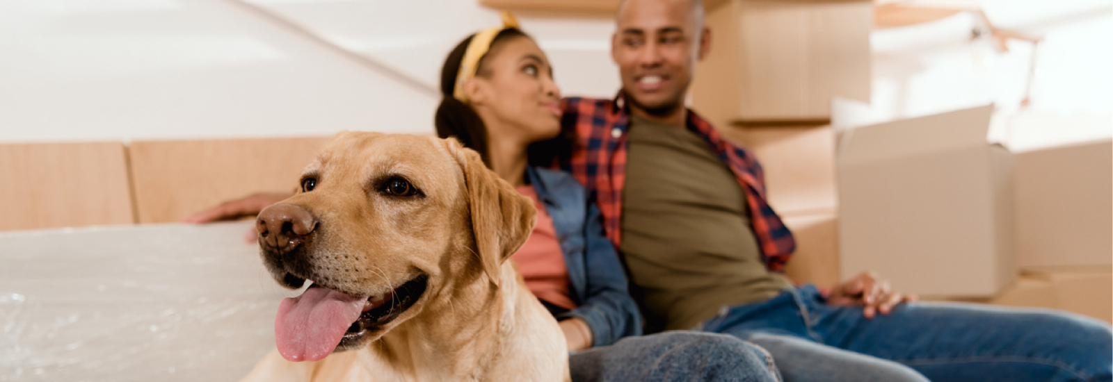 Tips For Moving With a Dog