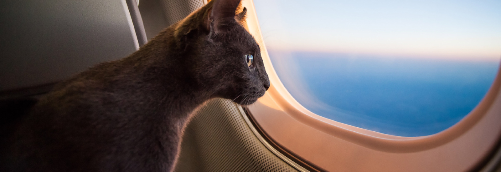 Military Discount Flights That Are Pet-Friendly
